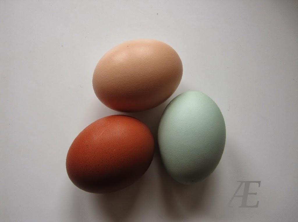 Grønlægger, grünleger, æg, flotte grønne,