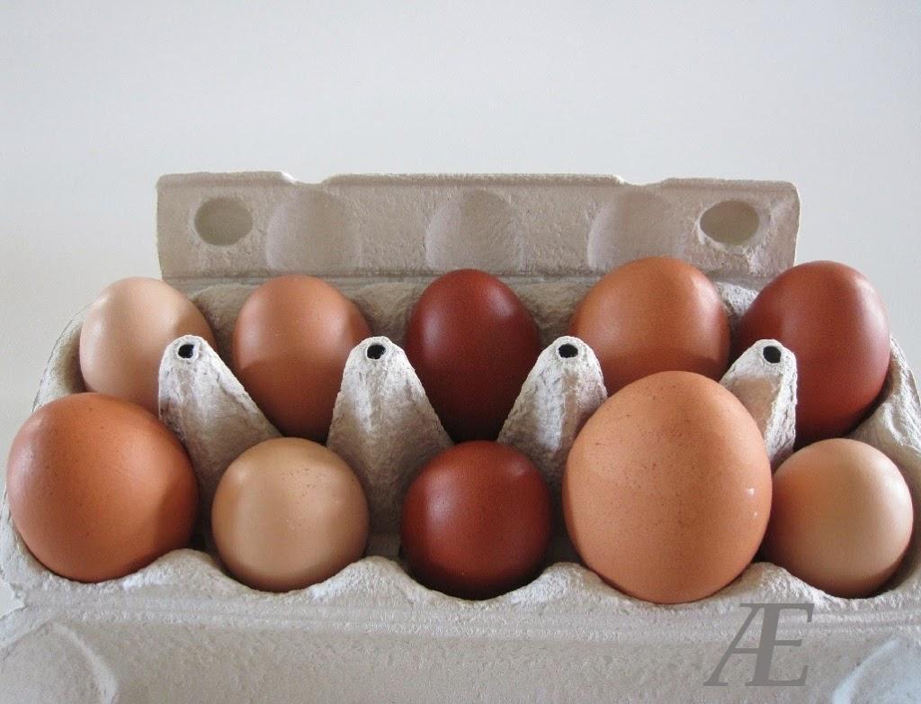 Grønlægger, grünleger, æg, flotte grønne, gigant, stort, store, dobbel, triple blomme, blommer
